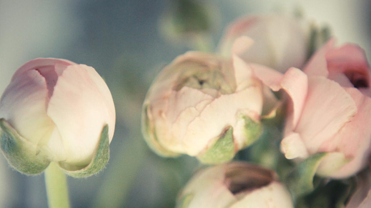 blomsterfen_3